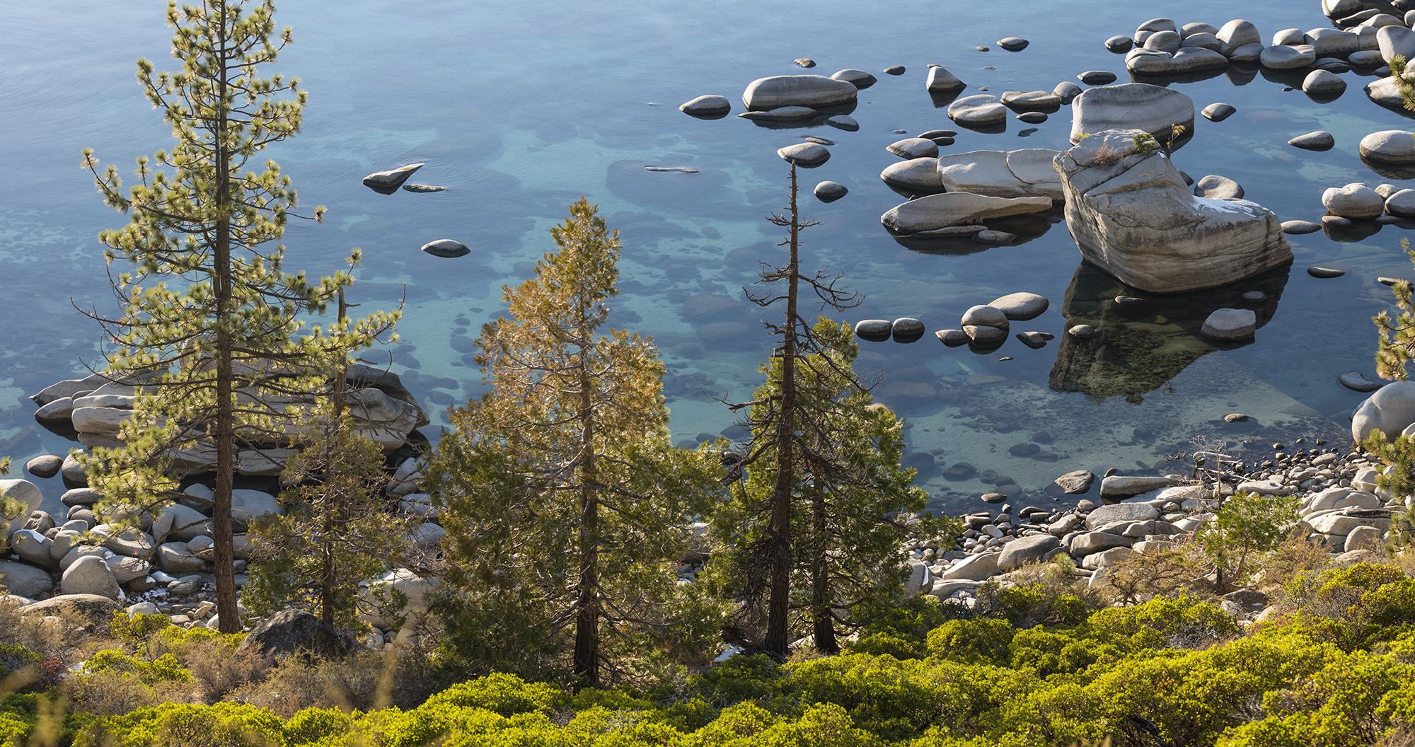 bonsai waters