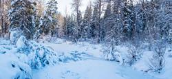 Winter south upper truckee