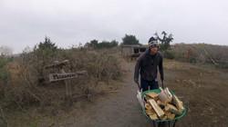 trevor getting wood