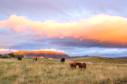 icelandic horses farm sunset