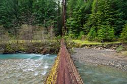 tree bridge humboldt redwoods