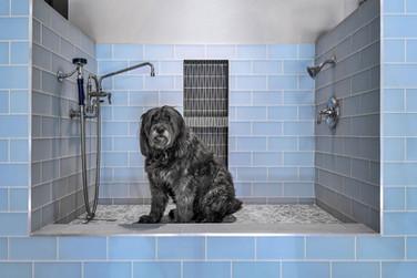 Dog Wash.jpg