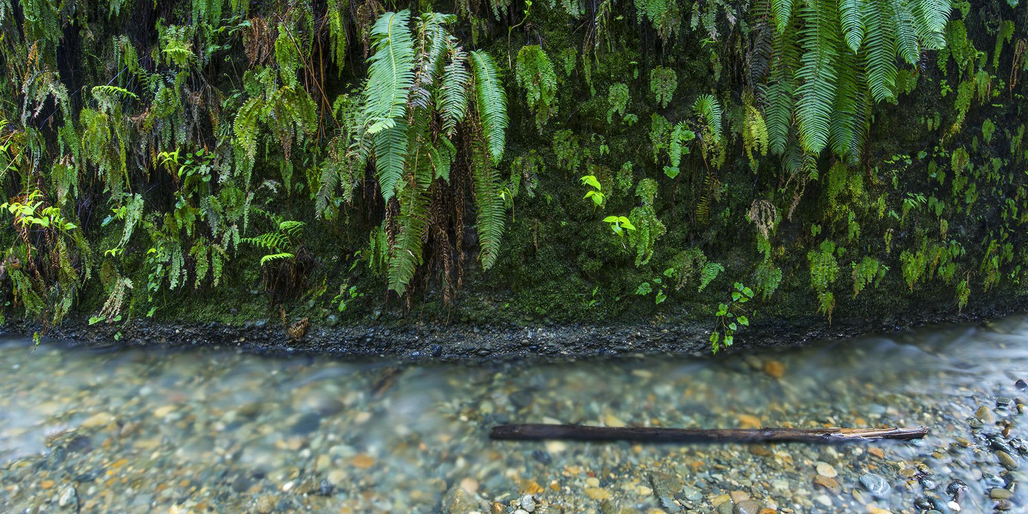 fern canyon river pano