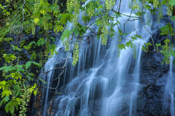 bridalvale falls tree