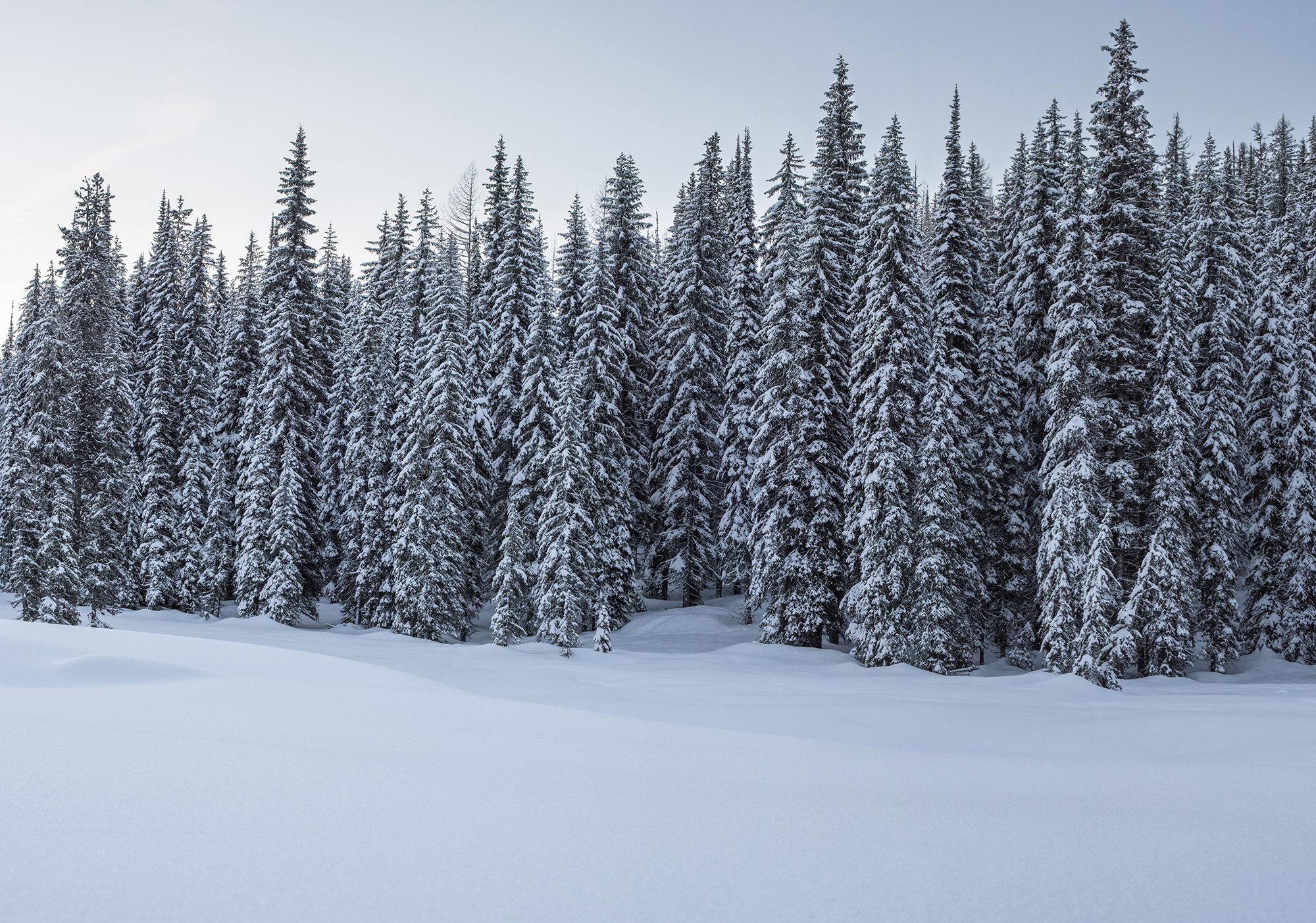 lolo pass snowy trees