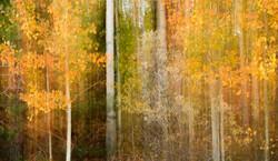 fall abstract 1 darker