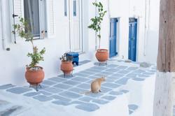 ginger cat in mykonos town