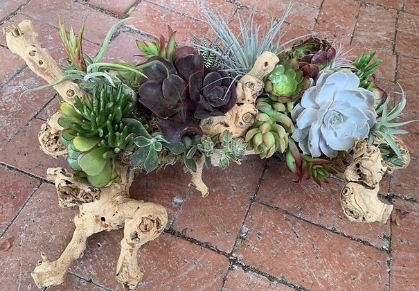 Succulent Center Piece