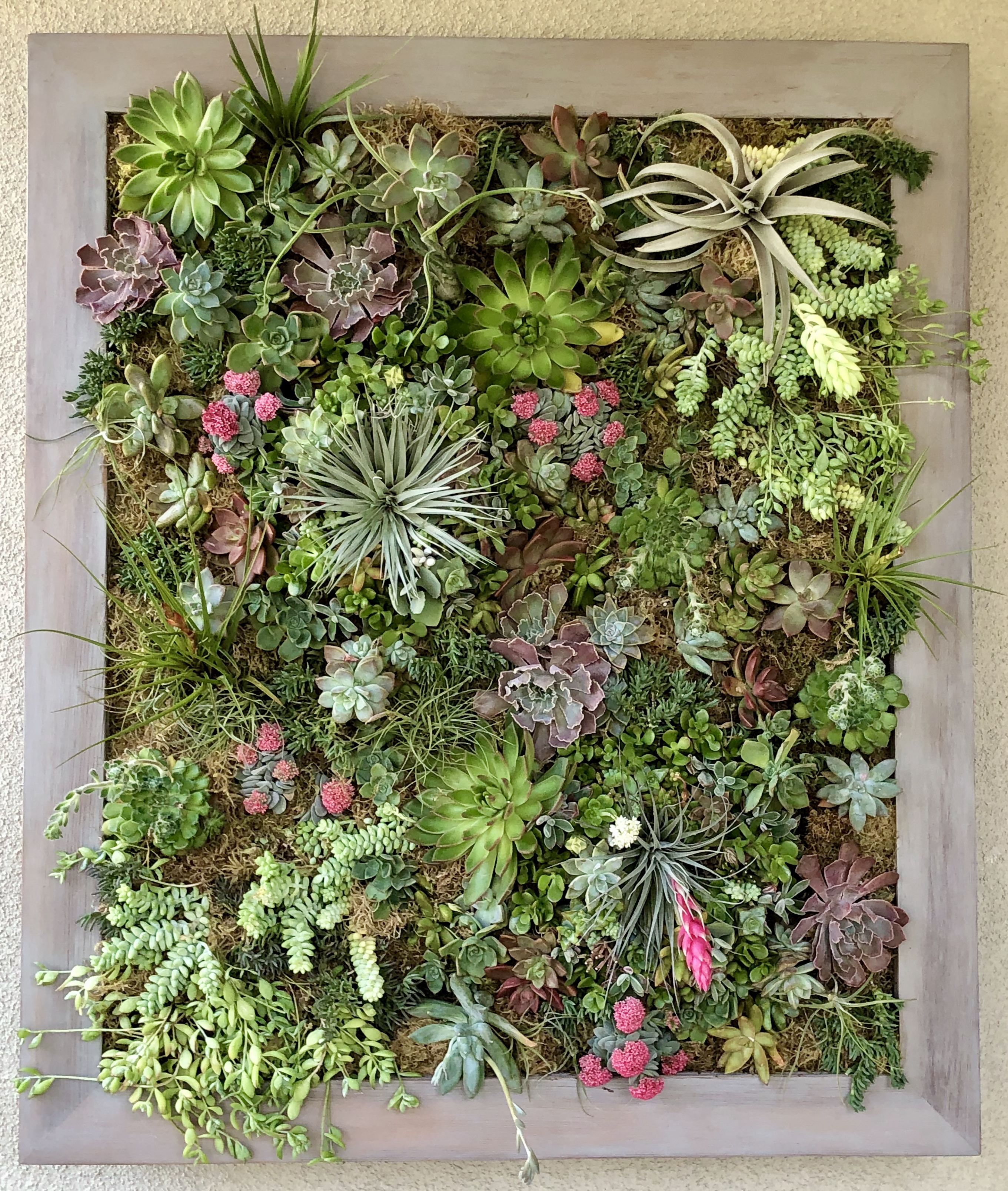 Custom Succulent Wall Art