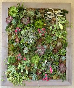 Custom Succulent Wall Art