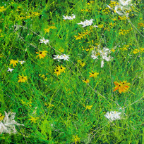 Wildflower Menagerie