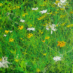 Wildflower Menagerie