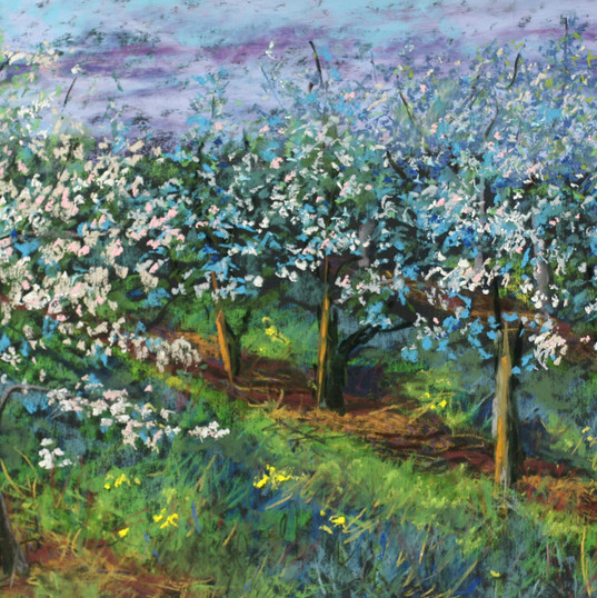 Apple Blossoms, Alla Prima