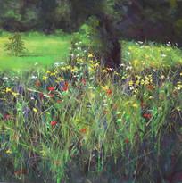 Wildflower Hedges