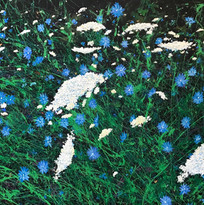 Blue Chicory & Queen Anne's Lace (2).jpg
