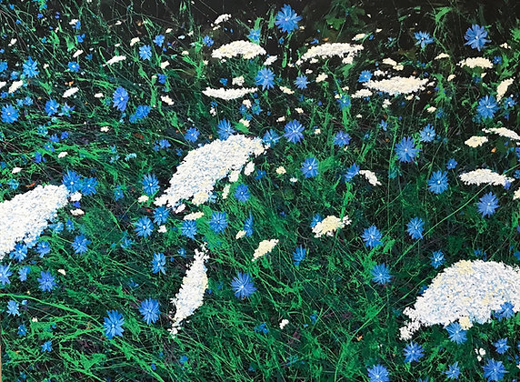 Blue Chicory & Queen Anne's Lace
