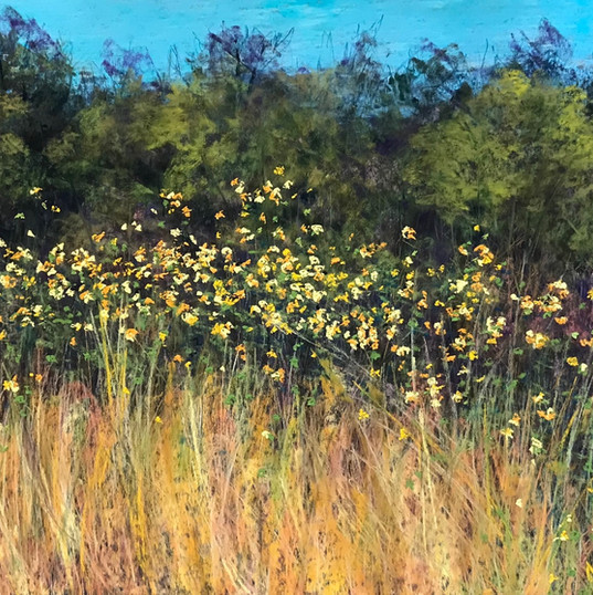 Carter's Sunflowers