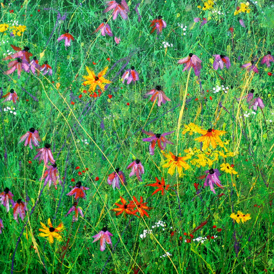 Dance of the Cone Flowers