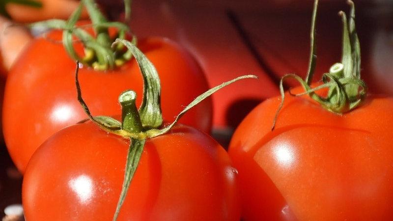 Tomates Célébrité