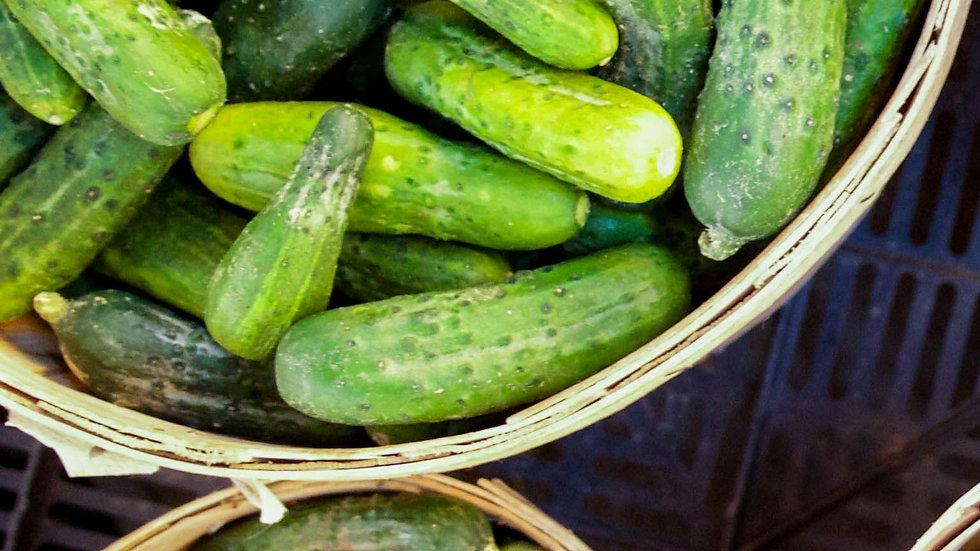 Concombre [petits]