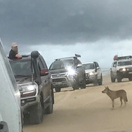 Convoy driving on sand at Fraser Island
