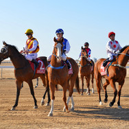 Birdsville Races with Offroad Ready