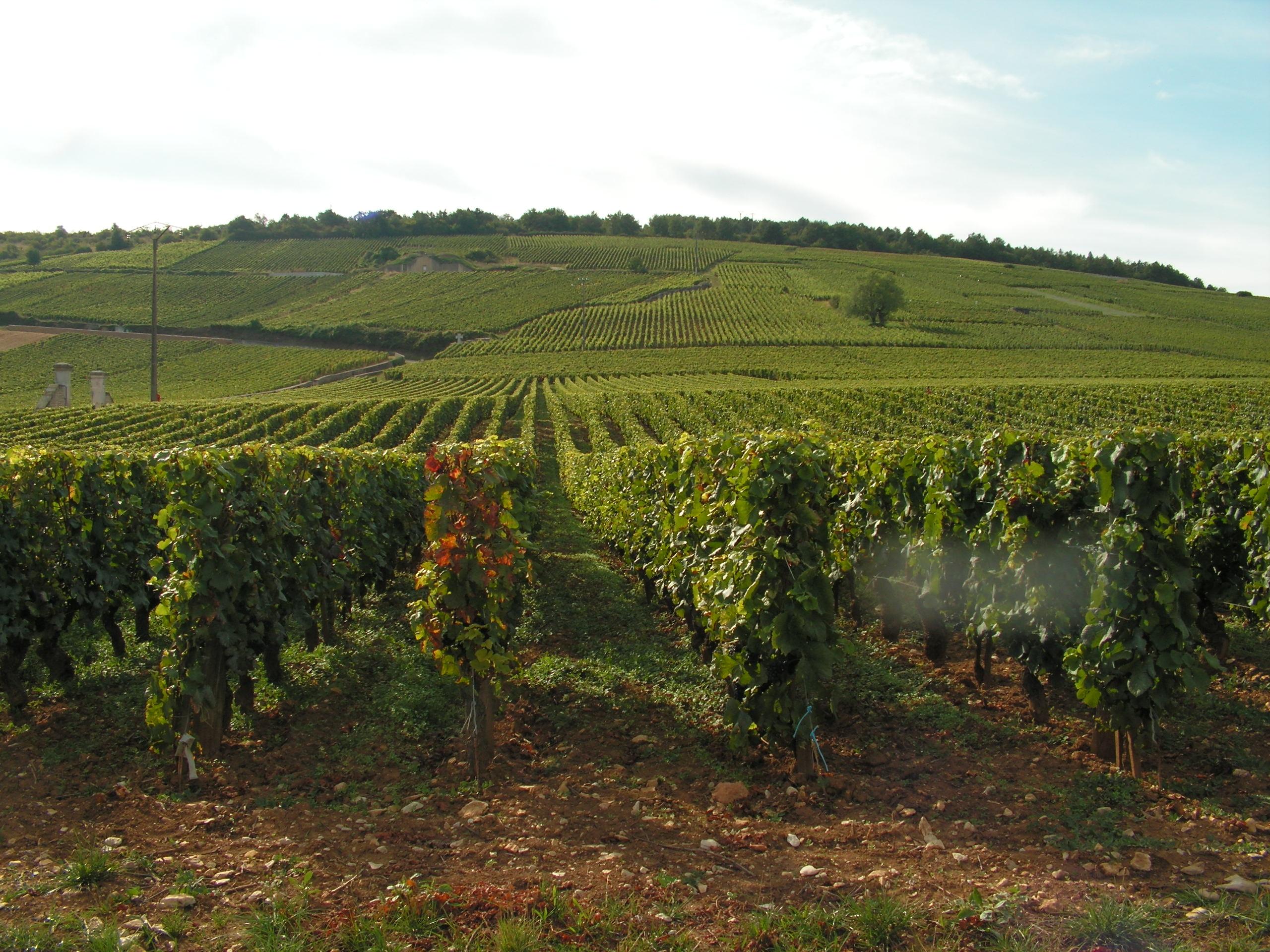 Vignoble de La Romanée Conti