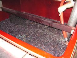 Vendange rouge de pinot noir