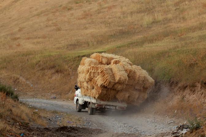 moisson au Kirghizistan