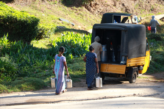 Collecting milk (Munnar, Kerala)