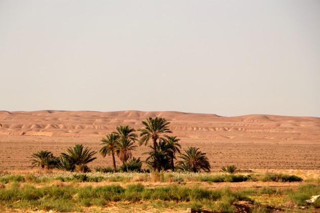 l'oasis de Tabas
