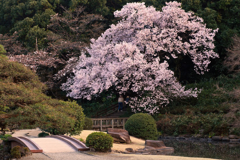 traditional garden in Tokyo