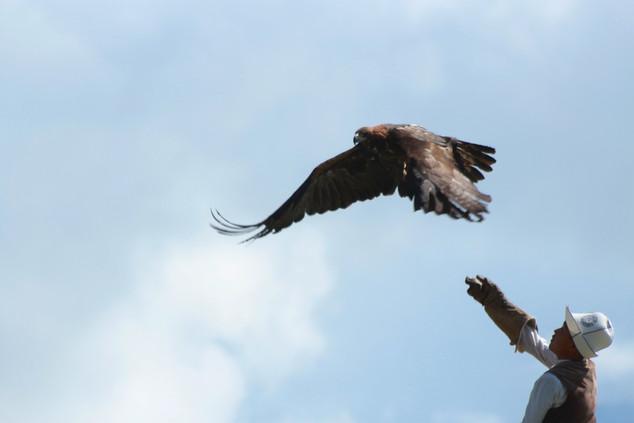 chasseur d'aigle au Kirghizistan