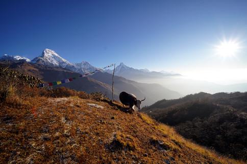 Khopra Danda trek (Annapurnas)