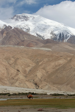 camels in front of glaciers, what else?