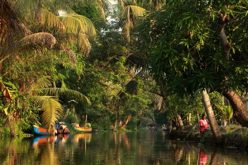 Backwaters (Alleppey, Kerala)