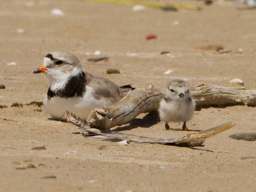 12. Last Birds on the Beach