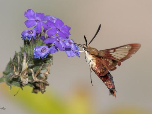 Bugs of Summer