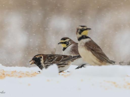 April Ice Storm: Return of the Snow Birds