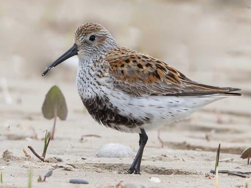 New Birds on the Beach