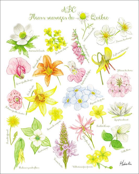 ABC wildflowers