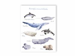 Carte Postale Mammifères marins du Québec