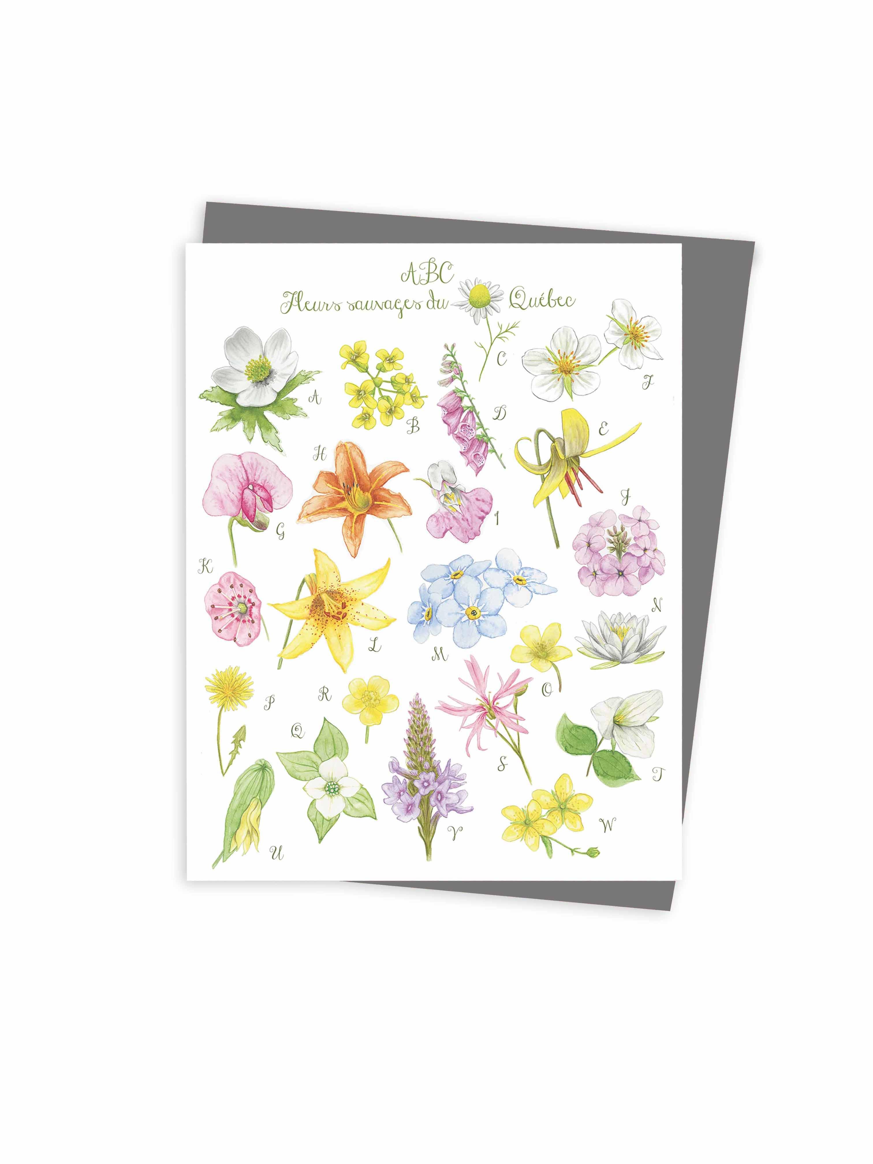 ABC wild flowers