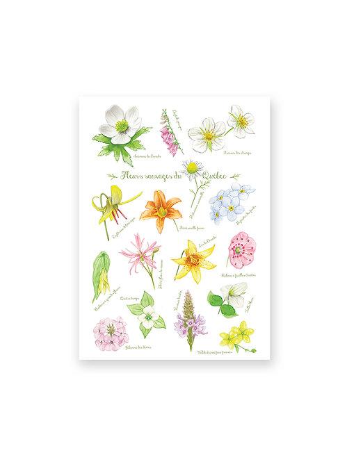 Quebec Flowers, Notebook