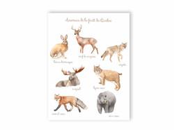 Carte Postale Animaux de la forêt du Québec