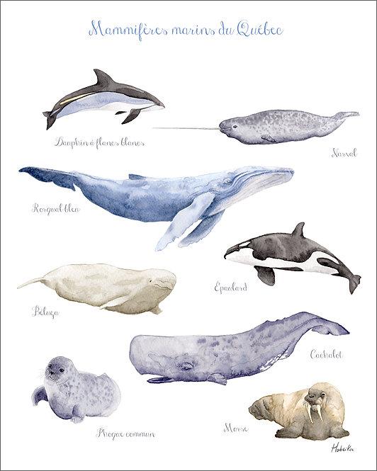 Affiche mammifères marins, baleines fait au Québec Canada, Whale poster, Marine Mammals art print, made in Quebec Canada
