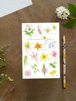 Quebec flowers notebook