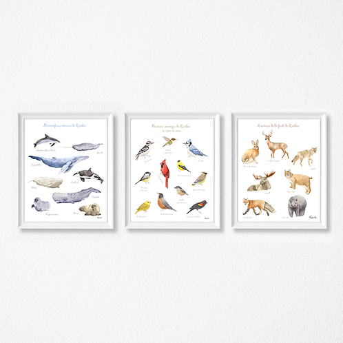 Fauna and flora trilogy