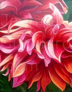 """Unruly""   (Red Dahlia)"
