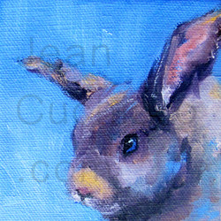 """Shy Bunny"""